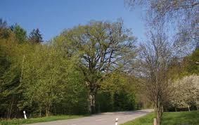 Proč vlastně VÝZVA Jeden náramek = jeden strom?